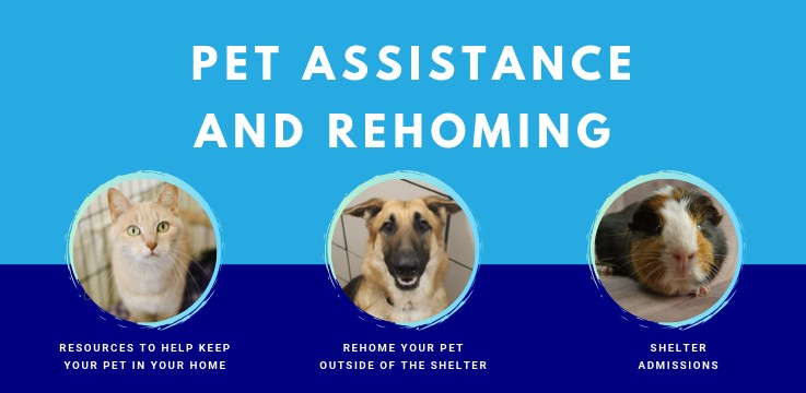 Pet Assistance and Rehoming Services